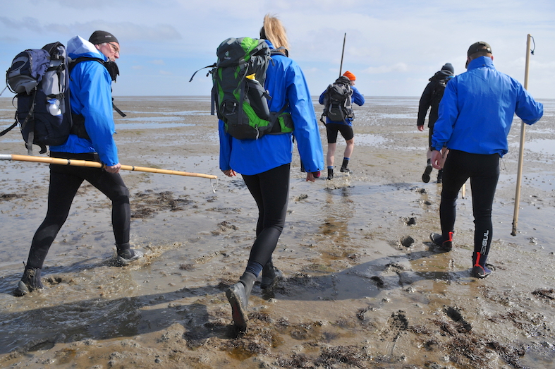 People walking in the mud of the Dutch Wadden Sea at low tide