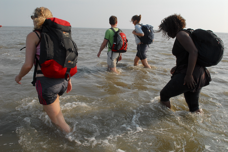 People walking in the water of the Dutch Wadden Sea at low tide during a mudwalk
